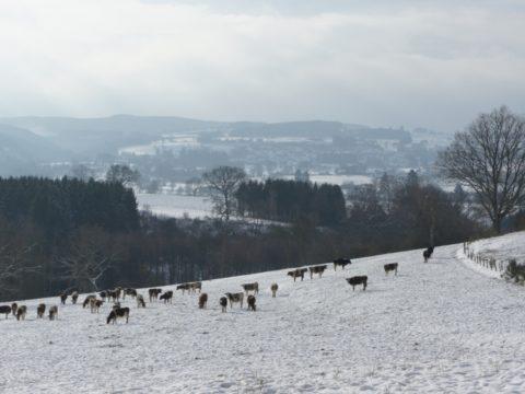 Winterkamperen Petite Suisse