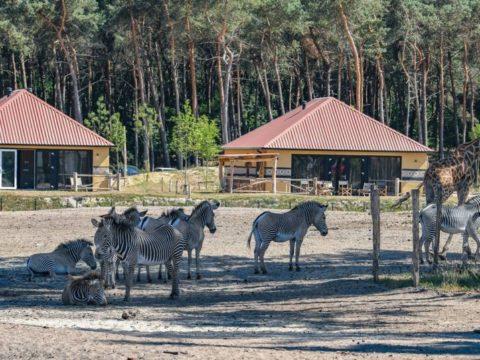 safari-resort-beekse-bergen-noord-brabant-10