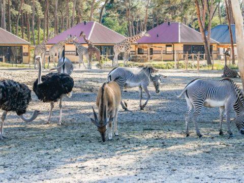 safari-resort-beekse-bergen-noord-brabant-13