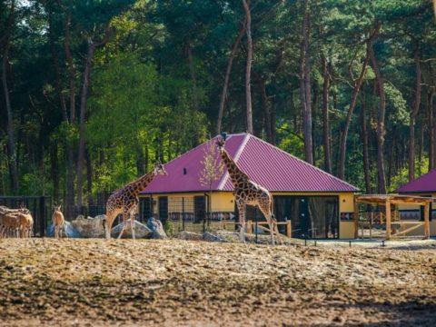 safari-resort-beekse-bergen-noord-brabant-15