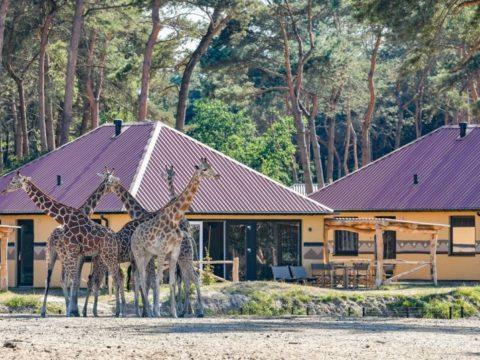 safari-resort-beekse-bergen-noord-brabant-9