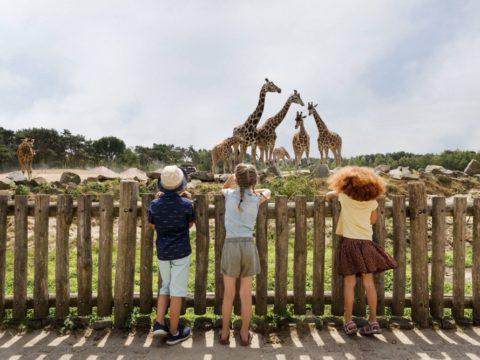 vakantiepark-dierenbos-in-noord-brabant-2