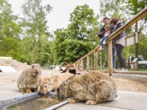 camping-rabbit-hill-5-sterren-3