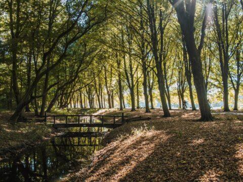 Europarcs-city-camping-amsterdamse-bos